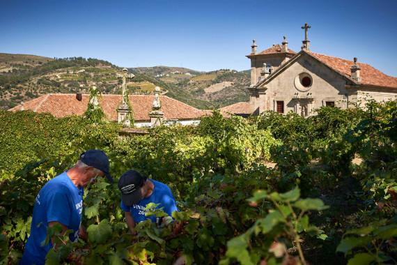 Douro Wines